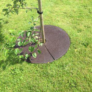 Tree Ring-0